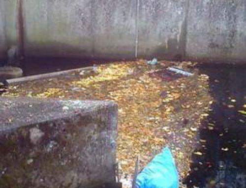 Neustadt: Schwimmbalken für die Fischtreppe