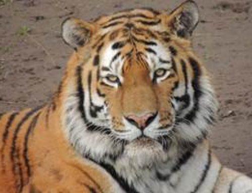 Landau: Kinderbetreuung im Zoo in den Weihnachtsferien