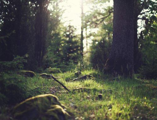 Ein Gewinn für Natur und Mensch